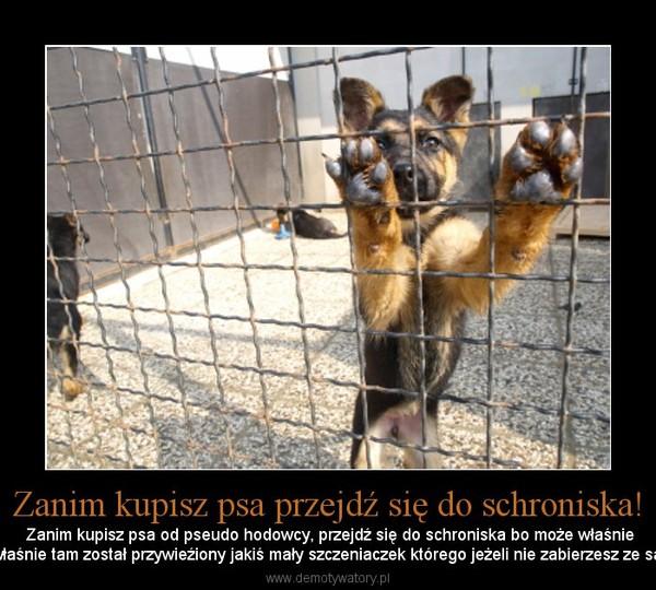 Zanim kupisz psa przejdź się do schroniska! – Zanim kupisz psa od pseudo hodowcy, przejdź się do schroniska bo może właśnietam czeka na ciebie twój najlepszy pszyjaciel , może właśnie tam został przywieźiony jakiś mały szczeniaczek którego jeżeli nie zabierzesz ze sabą nie dożyje następnego dnia! Przejdź się bo warto!
