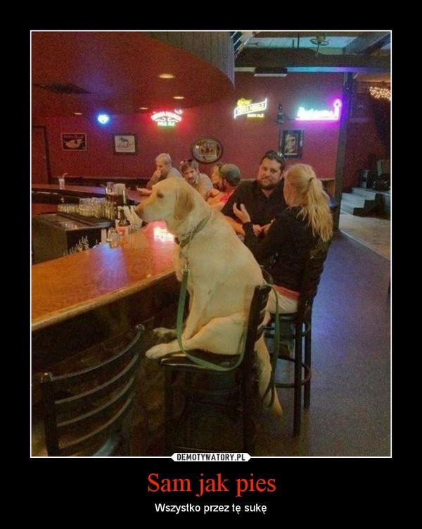 Sam jak pies – Wszystko przez tę sukę