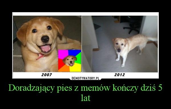 Doradzający pies z memów kończy dziś 5 lat –
