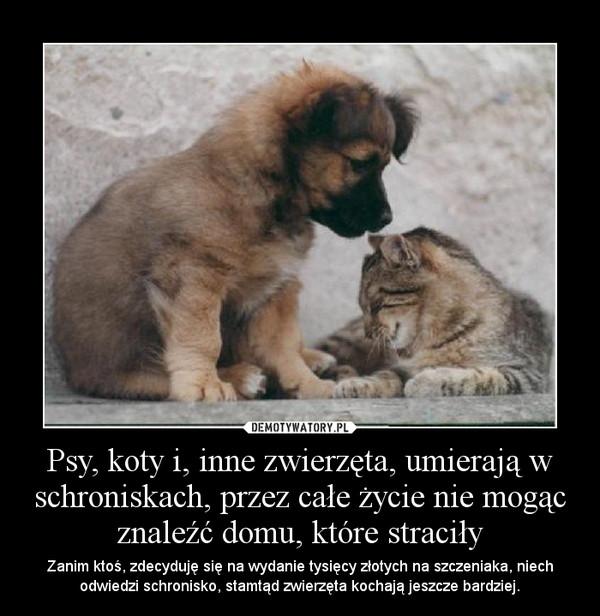 Psy, koty i, inne zwierzęta, umierają w schroniskach, przez całe życie nie mogąc znaleźć domu, które straciły – Zanim ktoś, zdecyduję się na wydanie tysięcy złotych na szczeniaka, niech odwiedzi schronisko, stamtąd zwierzęta kochają jeszcze bardziej.