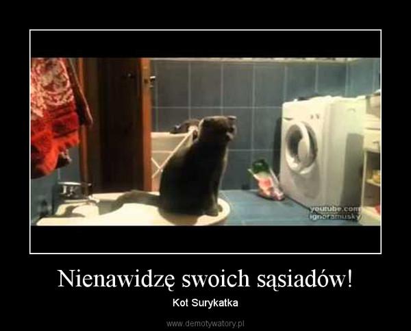 Nienawidzę swoich sąsiadów! – Kot Surykatka