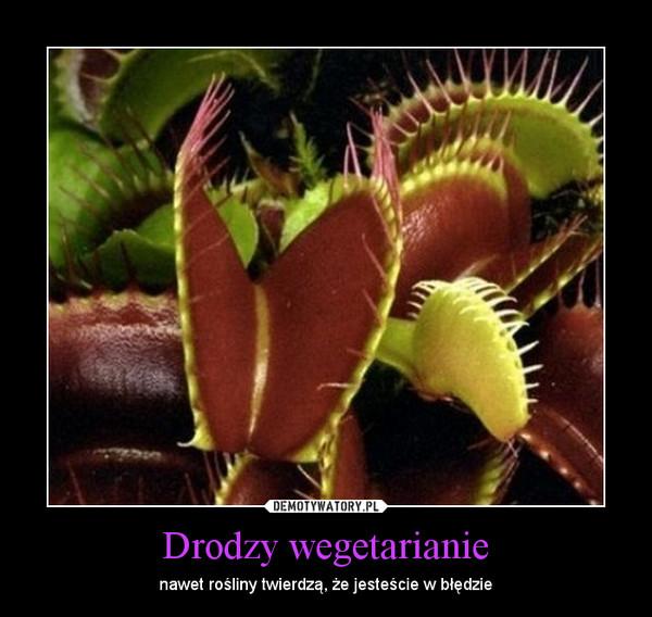 Drodzy wegetarianie – nawet rośliny twierdzą, że jesteście w błędzie