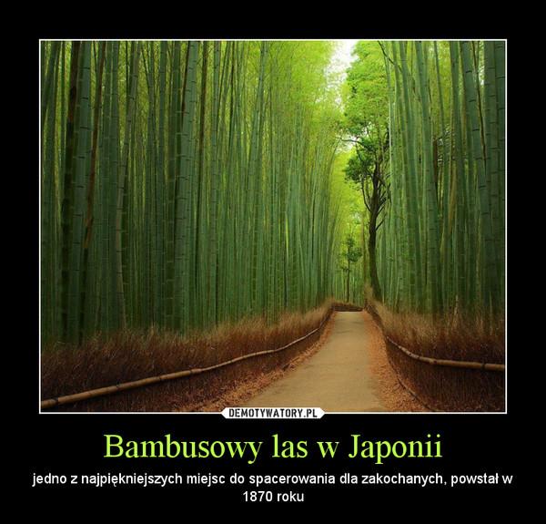 Bambusowy las w Japonii – jedno z najpiękniejszych miejsc do spacerowania dla zakochanych, powstał w 1870 roku