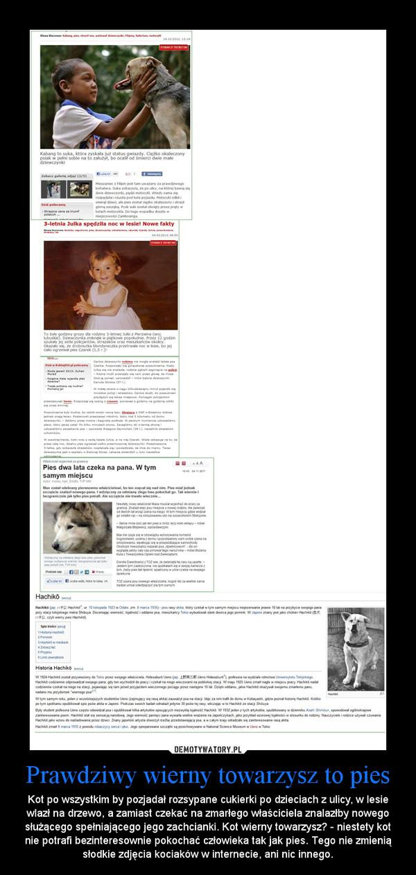 Prawdziwy wierny towarzysz to pies – Kot po wszystkim by pozjadał rozsypane cukierki po dzieciach z ulicy, w lesie wlazł na drzewo, a zamiast czekać na zmarłego właściciela znalazłby nowego służącego spełniającego jego zachcianki. Kot wierny towarzysz? - niestety kot nie potrafi bezinteresownie pokochać człowieka tak jak pies. Tego nie zmienią słodkie zdjęcia kociaków w internecie, ani nic innego.