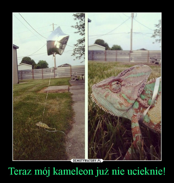 Teraz mój kameleon już nie ucieknie! –