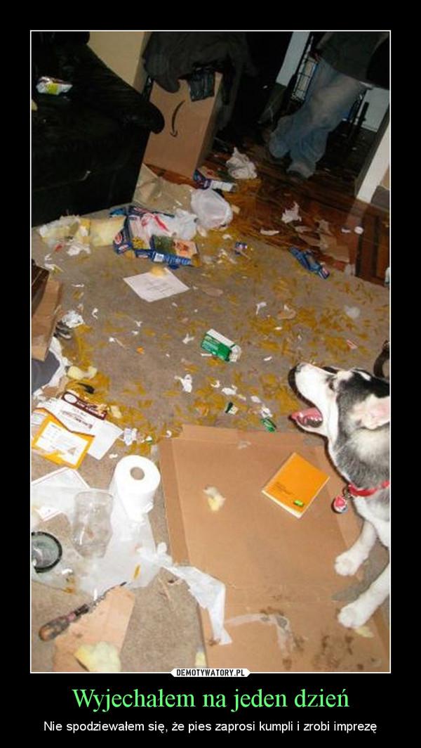 Wyjechałem na jeden dzień – Nie spodziewałem się, że pies zaprosi kumpli i zrobi imprezę
