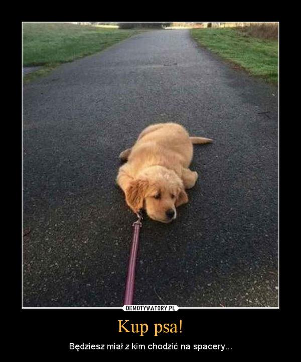 Kup psa! – Będziesz miał z kim chodzić na spacery...