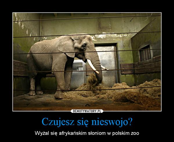 Czujesz się nieswojo? – Wyżal się afrykańskim słoniom w polskim zoo