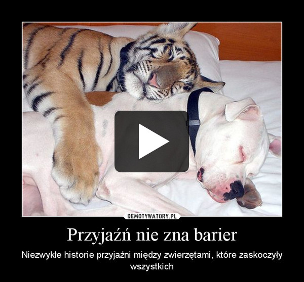 Przyjaźń nie zna barier – Niezwykłe historie przyjaźni między zwierzętami, które zaskoczyły wszystkich