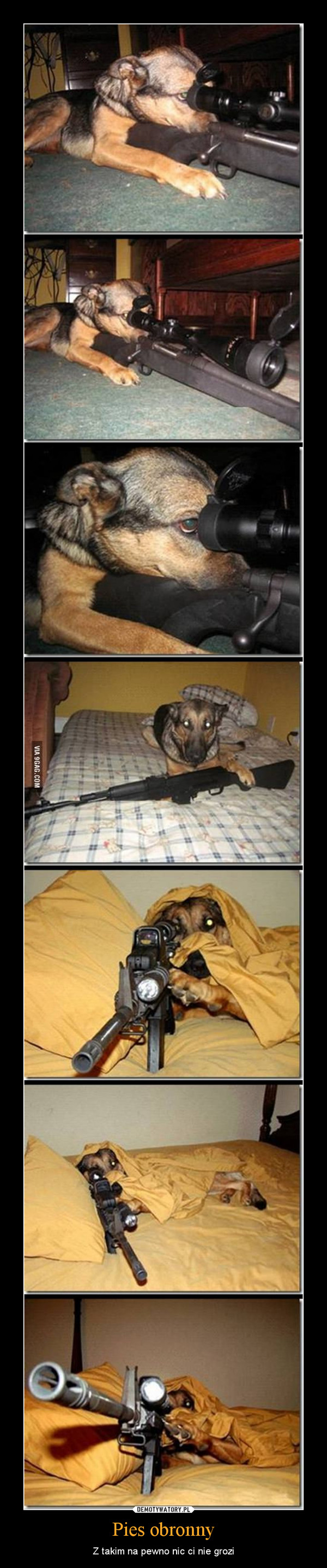 Pies obronny – Z takim na pewno nic ci nie grozi