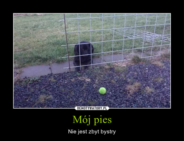 Mój pies – Nie jest zbyt bystry