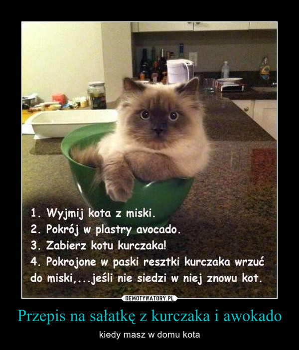 Znalezione obrazy dla zapytania uczulenie na kota demotywator