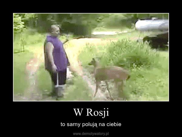 W Rosji – to sarny polują na ciebie