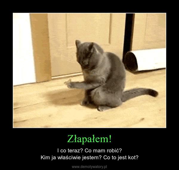 Złapałem! – I co teraz? Co mam robić?Kim ja właściwie jestem? Co to jest kot?