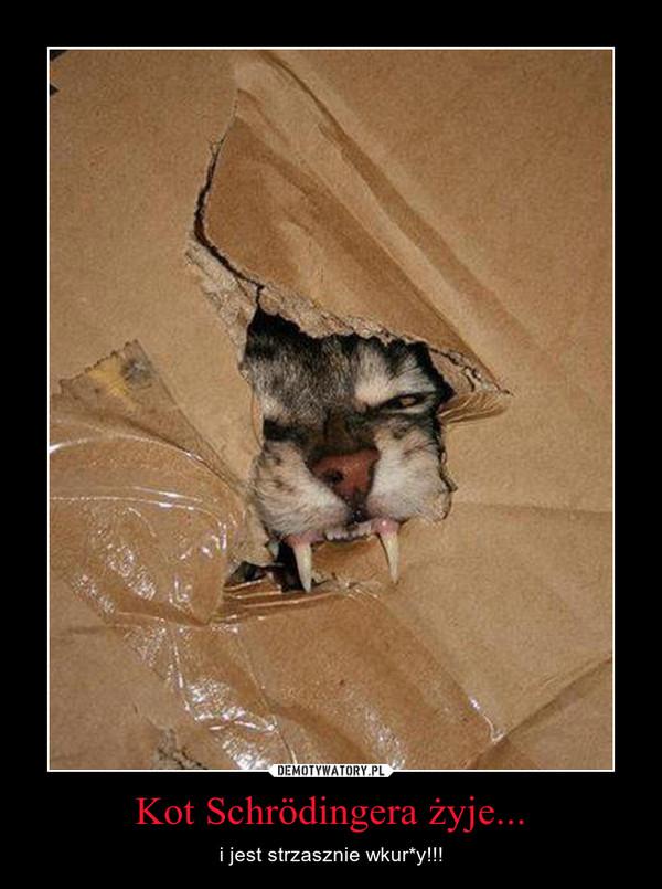 Kot Schrödingera żyje... – i jest strzasznie wkur*y!!!