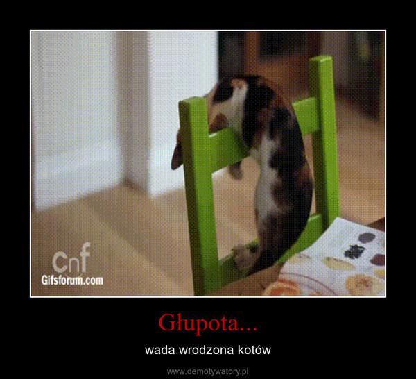 Głupota... – wada wrodzona kotów