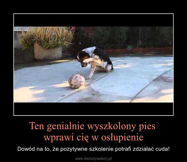 Ten genialnie wyszkolony pies wprawi cię w osłupienie – Dowód na to, że pozytywne szkolenie potrafi zdziałać cuda!
