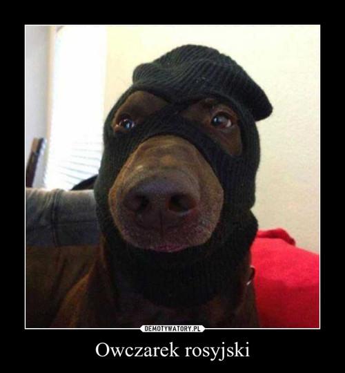 Owczarek rosyjski