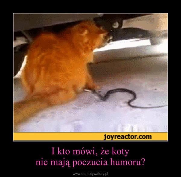 I kto mówi, że kotynie mają poczucia humoru? –