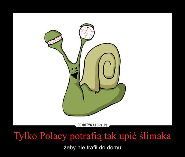 Tylko Polacy potrafią tak upić ślimaka – żeby nie trafił do domu