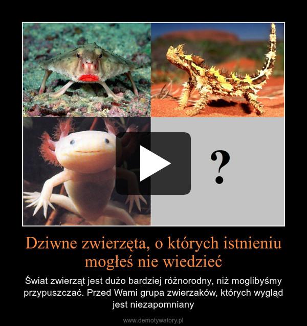 Dziwne zwierzęta, o których istnieniu mogłeś nie wiedzieć – Świat zwierząt jest dużo bardziej różnorodny, niż moglibyśmy przypuszczać. Przed Wami grupa zwierzaków, których wyglądjest niezapomniany
