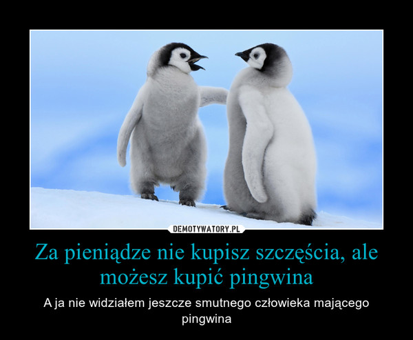 Za pieniądze nie kupisz szczęścia, ale możesz kupić pingwina – A ja nie widziałem jeszcze smutnego człowieka mającego pingwina