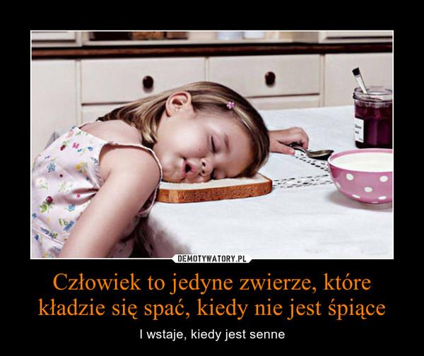 Człowiek to jedyne zwierze, które kładzie się spać, kiedy nie jest śpiące – I wstaje, kiedy jest senne