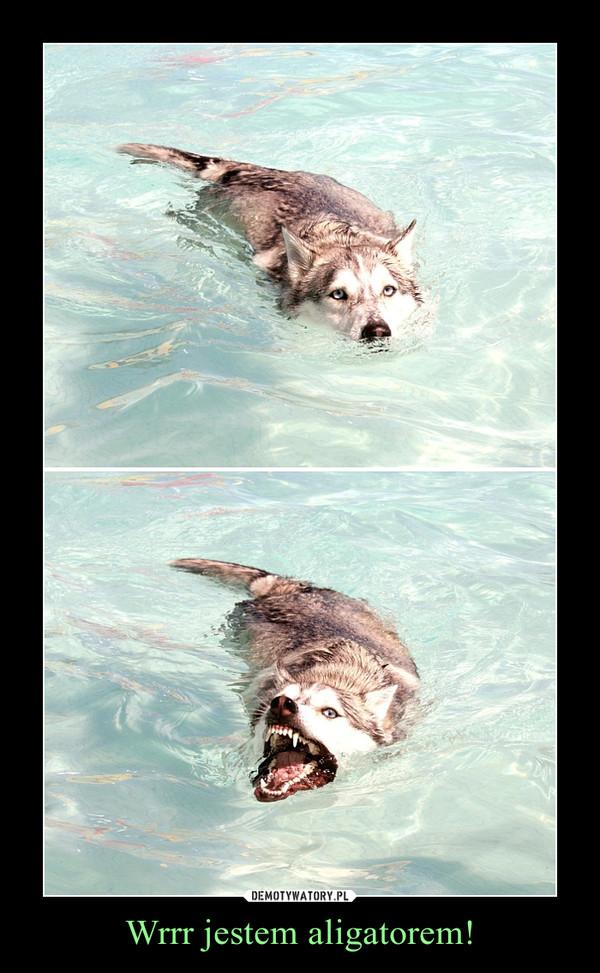 Wrrr jestem aligatorem! –