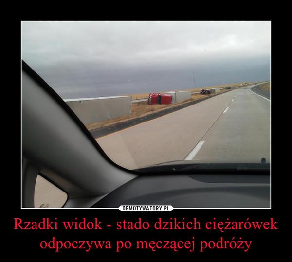 Rzadki widok - stado dzikich ciężarówek odpoczywa po męczącej podróży –