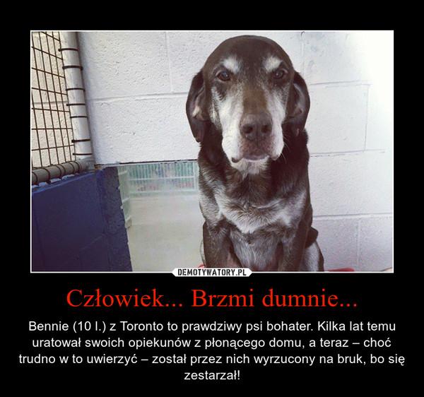 Człowiek... Brzmi dumnie... – Bennie (10 l.) z Toronto to prawdziwy psi bohater. Kilka lat temu uratował swoich opiekunów z płonącego domu, a teraz – choć trudno w to uwierzyć – został przez nich wyrzucony na bruk, bo się zestarzał!