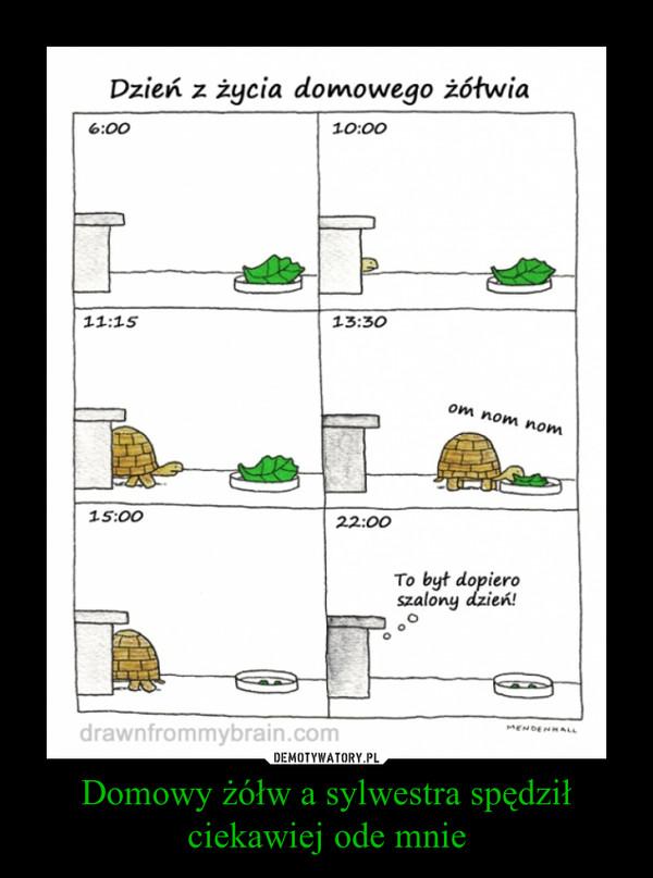 Domowy żółw a sylwestra spędził ciekawiej ode mnie –