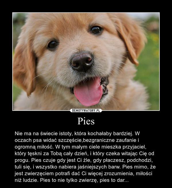 Pies – Nie ma na świecie istoty, która kochałaby bardziej. W oczach psa widać szczęście,bezgraniczne zaufanie i ogromną miłość. W tym małym ciele mieszka przyjaciel, który tęskni za Tobą cały dzień, i który czeka witając Cię od progu. Pies czuje gdy jest Ci źle, gdy płaczesz, podchodzi, tuli się, i wszystko nabiera jaśniejszych barw. Pies mimo, że jest zwierzęciem potrafi dać Ci więcej zrozumienia, miłości niż ludzie. Pies to nie tylko zwierzę, pies to dar...
