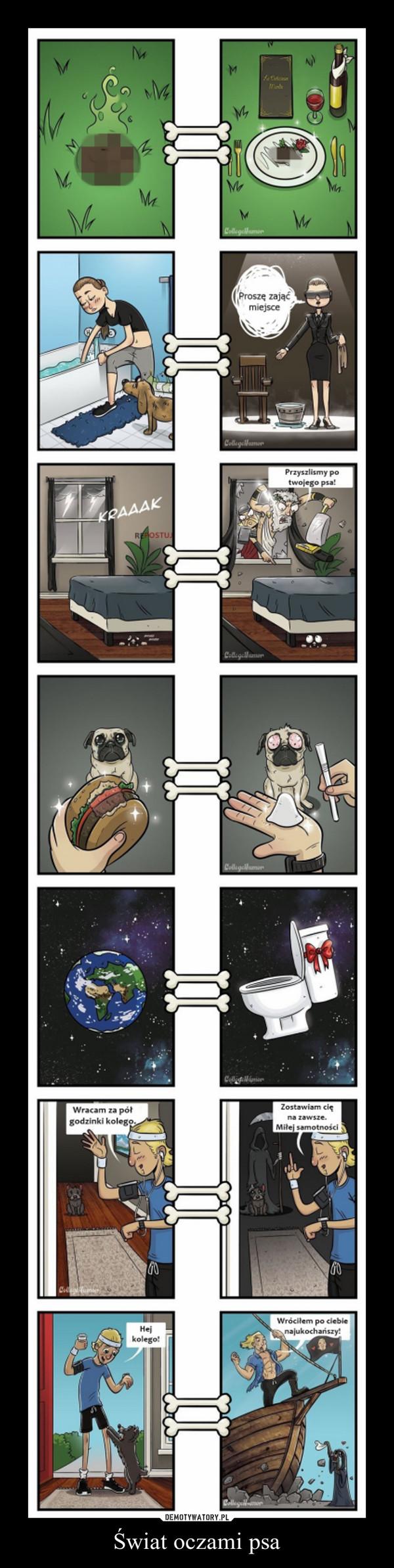 Świat oczami psa –