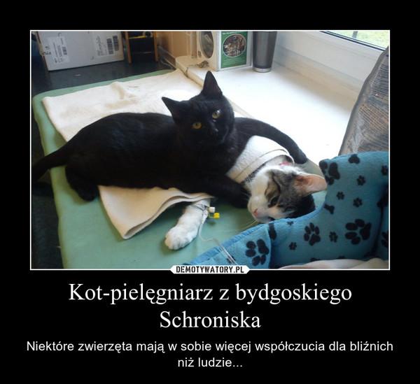 Kot-pielęgniarz z bydgoskiego Schroniska – Niektóre zwierzęta mają w sobie więcej współczucia dla bliźnich niż ludzie...