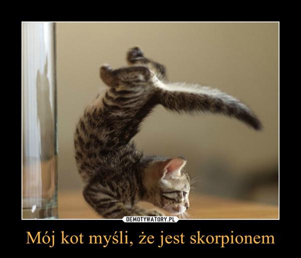 Mój kot myśli, że jest skorpionem –