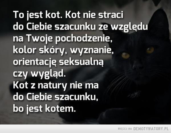 Koty –