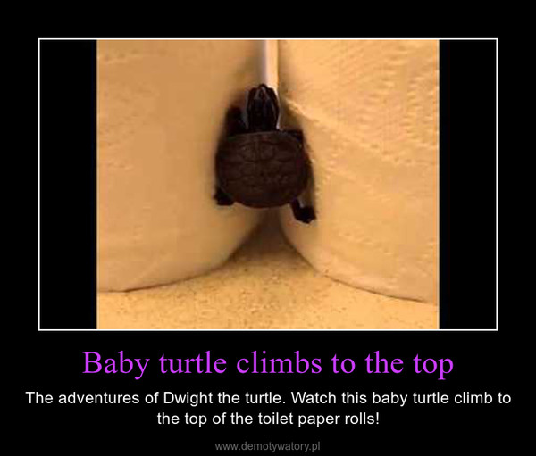 Baby turtle climbs to the top – The adventures of Dwight the turtle. Watch this baby turtle climb to the top of the toilet paper rolls!