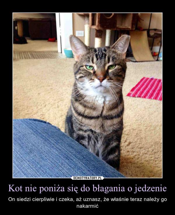 Kot nie poniża się do błagania o jedzenie – On siedzi cierpliwie i czeka, aż uznasz, że właśnie teraz należy go nakarmić