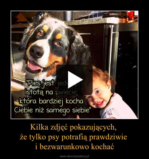 Kilka zdjęć pokazujących, że tylko psy potrafią prawdziwie i bezwarunkowo kochać –