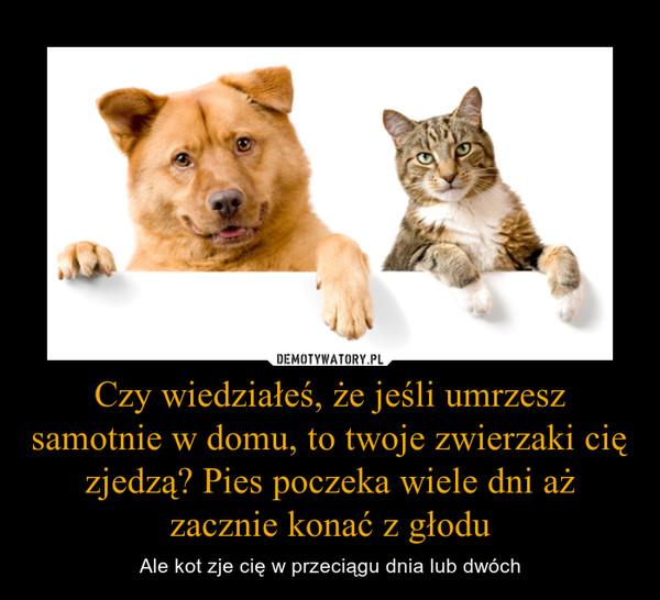 Czy wiedziałeś, że jeśli umrzesz samotnie w domu, to twoje zwierzaki cię zjedzą? Pies poczeka wiele dni aż zacznie konać z głodu – Ale kot zje cię w przeciągu dnia lub dwóch