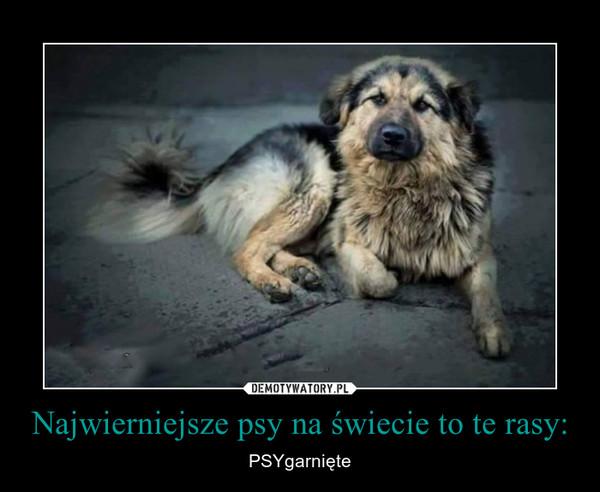 Najwierniejsze psy na świecie to te rasy: – PSYgarnięte