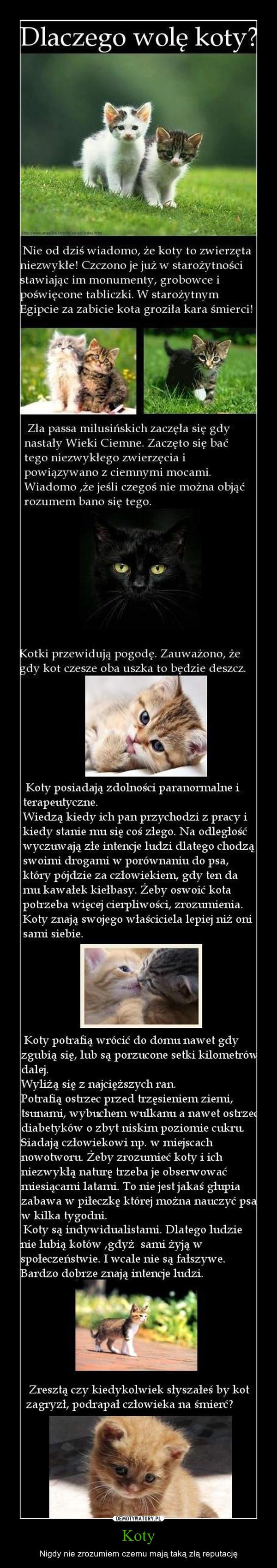 Koty – Nigdy nie zrozumiem czemu mają taką złą reputację