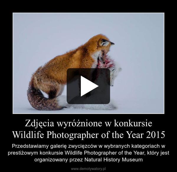 Zdjęcia wyróżnione w konkursie Wildlife Photographer of the Year 2015 – Przedstawiamy galerię zwycięzców w wybranych kategoriach w prestiżowym konkursie Wildlife Photographer of the Year, który jest organizowany przez Natural History Museum