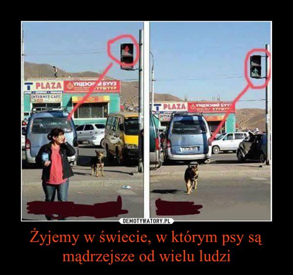 Żyjemy w świecie, w którym psy są mądrzejsze od wielu ludzi –