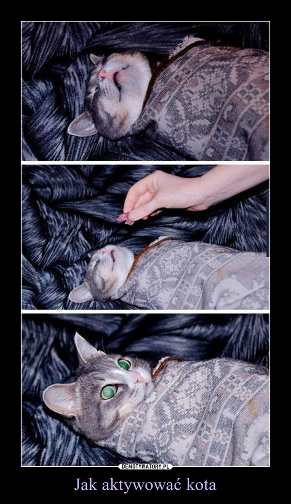 Jak aktywować kota –