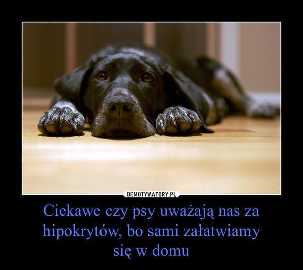 Ciekawe czy psy uważają nas za hipokrytów, bo sami załatwiamysię w domu –