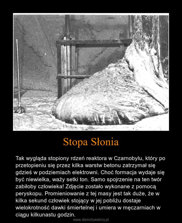 Stopa Słonia – Tak wygląda stopiony rdzeń reaktora w Czarnobylu, który po przetopieniu się przez kilka warstw betonu zatrzymał się gdzieś w podziemiach elektrowni. Choć formacja wydaje się być niewielka, waży setki ton. Samo spojrzenie na ten twór zabiłoby człowieka! Zdjęcie zostało wykonane z pomocą peryskopu. Promieniowanie z tej masy jest tak duże, że w kilka sekund człowiek stojący w jej pobliżu dostaje wielokrotność dawki śmiertelnej i umiera w męczarniach w ciągu kilkunastu godzin.