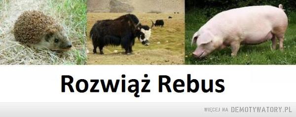 Rozwiąż Rebus –