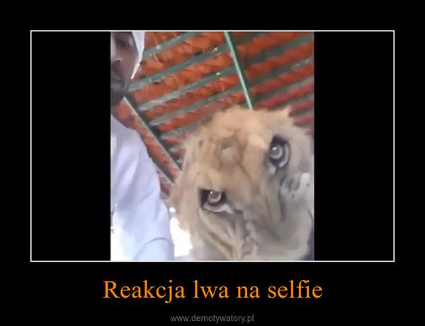 Reakcja lwa na selfie –