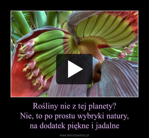 Rośliny nie z tej planety?Nie, to po prostu wybryki natury,na dodatek piękne i jadalne –